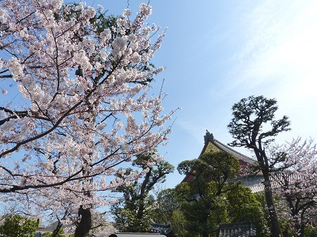 Череша в Япония