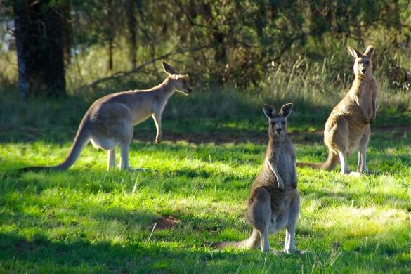 Столици в Австралия и Океания