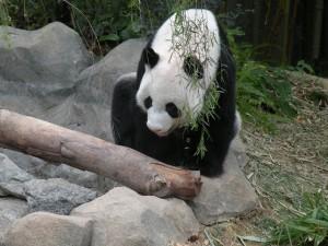 Зоопарк в Сингапур