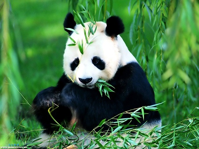 Зоопарк в Пекин панда